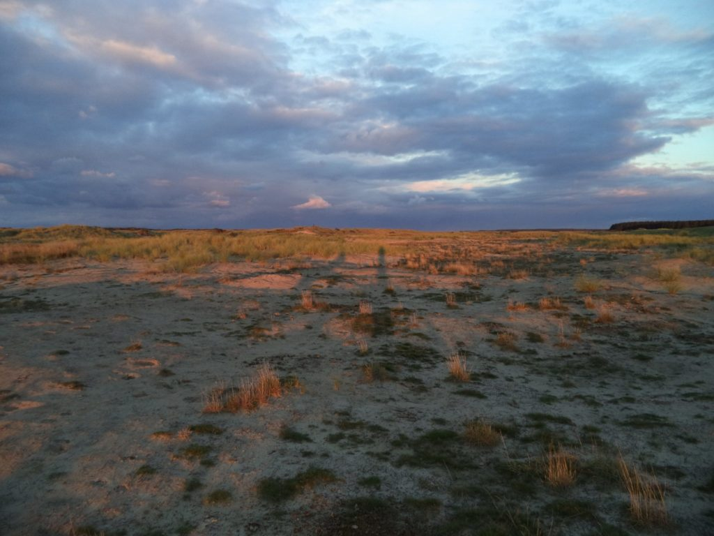 Roosduinen Ameland foto A&W
